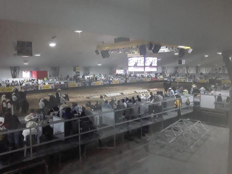 5.1. Feria Equina.
